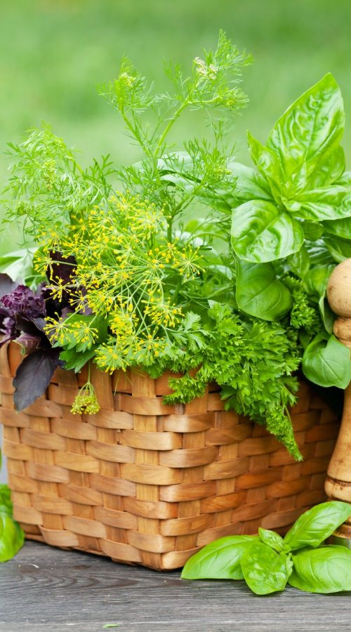 health and herbs